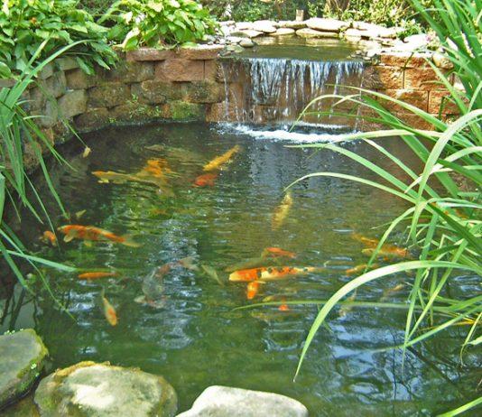 Fish Pond Help