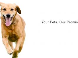 dog vitamins for skin and coat health