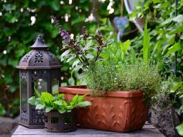 Honing Herbal Powers